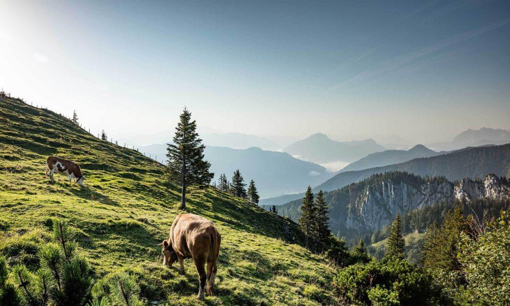 Sommer Berge Kühe